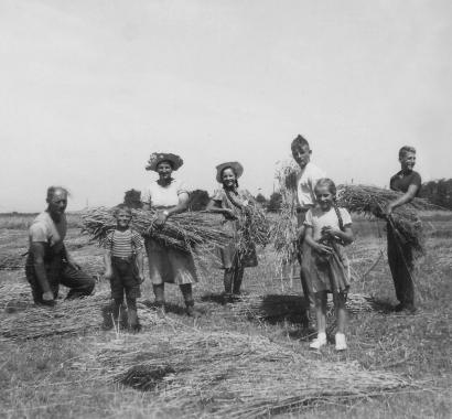 Baldingen Ernte 1948